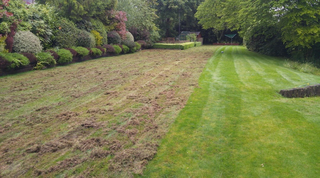 fjernelse af mos i græsplæne
